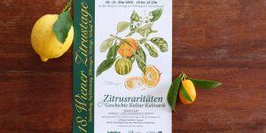 Der Geschmack von Zitrus - zu Pfingsten in Schönbrunn